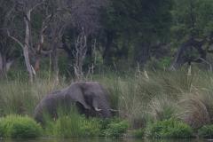 elefantoka1