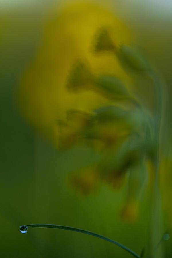 _MG_0417-1