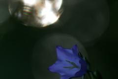 IMG_6964-1